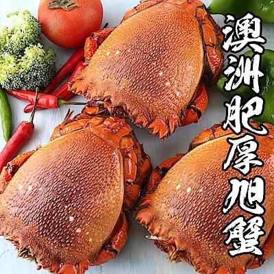 【海鮮王】澳洲肥厚大旭蟹 6隻組(400g-500g/隻)