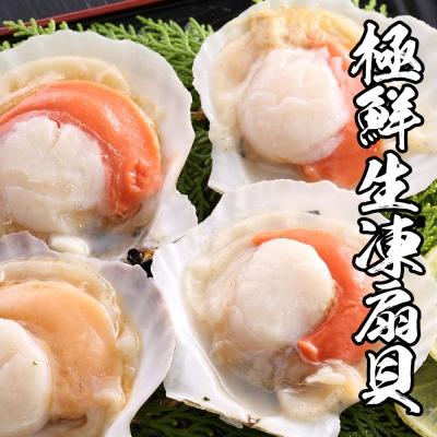 海鮮王 極鮮生凍扇貝 *1包組500g±10%/包( 7-10顆/包 )(任選)