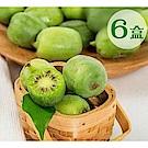 天天果園*紐西蘭Kiwi berries寶貝奇異果 (每盒125g±10%) x6盒