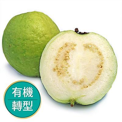 【果物配-任選699免運】珍珠芭樂.有機轉型期(600g/2~3顆)