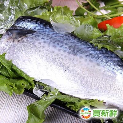 【買新鮮】省產鯖魚一夜干40片禮盒組(130g±10%/片)