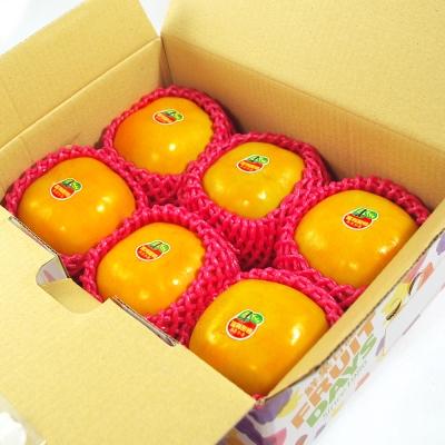 鮮果日誌 - 9A摩天嶺富有甜柿(6入裝)