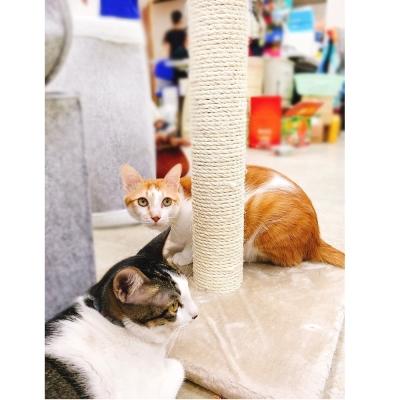 寵喵樂《天然麻-立體圓柱型貓抓柱》TW006