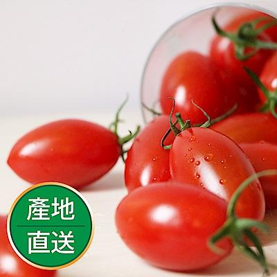 【果物配-任選699免運】玉女小番茄.溫室無毒(350g/1盒)