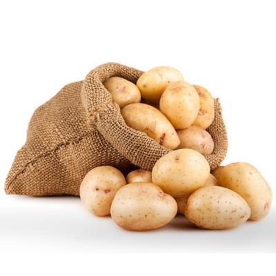 鮮採家 新鮮馬鈴薯10台斤1箱