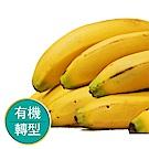 【果物配】香蕉.有機轉型期(扎實軟Q甜而不膩/3公斤)