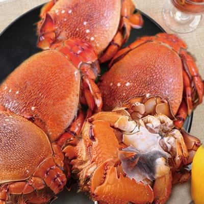 鮮選 澳洲旭蟹超大肥厚 2隻組( 550g±10%/隻)