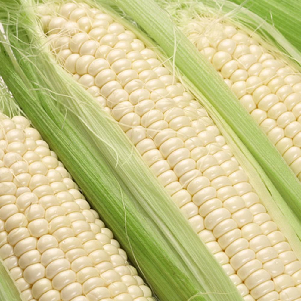 鮮採家 香Q糯米玉米3台斤1箱(約6-10支)