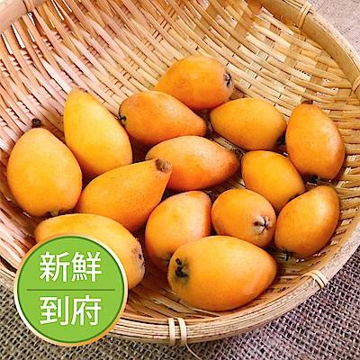 【果物配】枇杷.產銷履歷(大顆滿意/1.8 kg±10%)