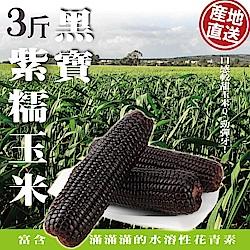 【天天果園】黑寶紫糯米玉米(3斤/箱)