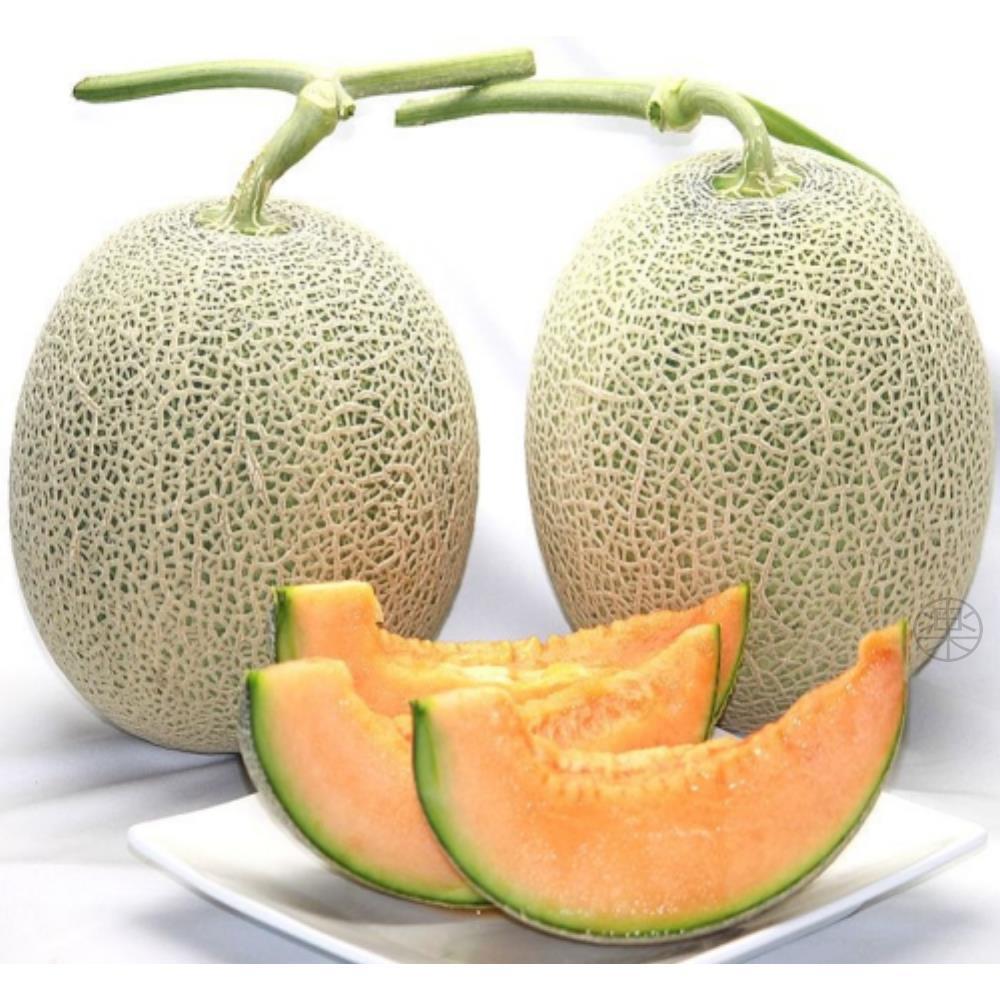 果之蔬 網紋溫室綠肉哈蜜瓜 3台斤±10%(二顆入禮盒組)