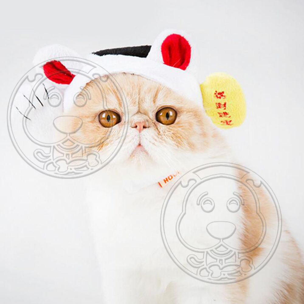 dyy》賣萌招財貓帽寵物帽子S-L號