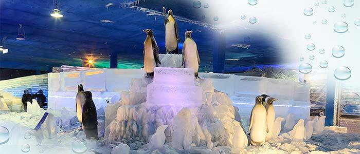 極地冰風暴實境秀