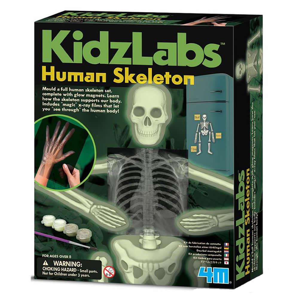 4M科學探索 - 骨頭的奧秘