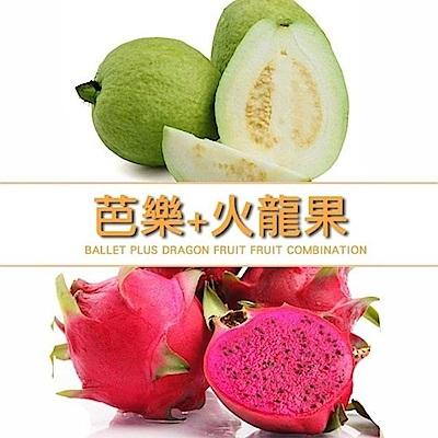 【天天果園】燕巢珍珠芭樂+紅肉火龍果雙拼 共12台斤