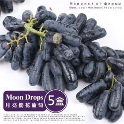 果之蔬-美國空運無籽月亮葡萄Moon Drops 五