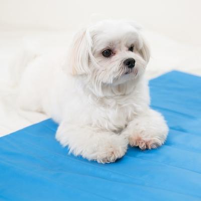米夢家居 嚴選長效型降6度冰砂冰涼墊(80*45CM)15公斤以下中型寵物用