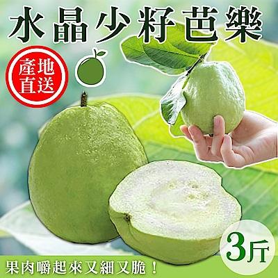 【天天果園】水晶少籽芭樂(3斤/箱)