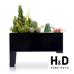 H&D療癒系植栽系列 滿1件大優惠