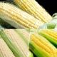 鮮採家 玉米家族綜合蔬果(黃玉米+水果玉米+糯米玉米) product thumbnail 1