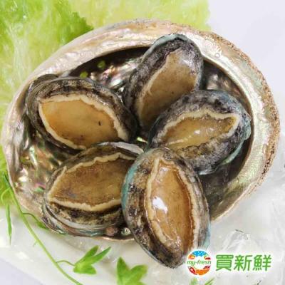 【買新鮮】珍珠鮑魚30g±10%/顆 (約6顆一包)(任選)