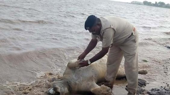 10 lions, hundreds of dead animals in India floods: report