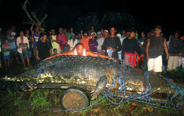 """FILE-In this Sept. 4, 2011 file photo, residents watch as Mayor Cox Elorde of Bunawan township, Agusan del Sur province, pretends to measure a huge crocodile, later named """"Lolong,"""" after its capture by residents and staff of a crocodile farm along a creek in Bunawan in southern Philippines. The saltwater male crocodile, measuring 20.24 feet (6.17 meters) and proclaimed by Guinness World Records as the world's largest saltwater crocodile in captivity, died Sunday, Feb. 10, 2013. (AP Photo/File)"""