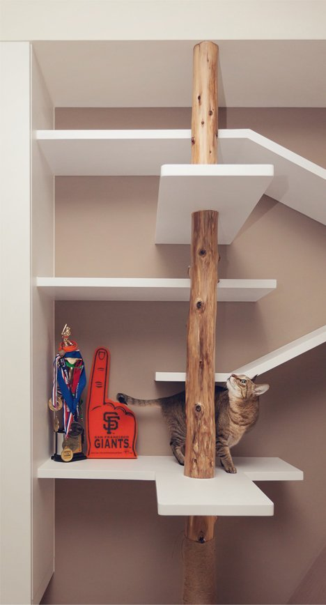 cat house climbing space